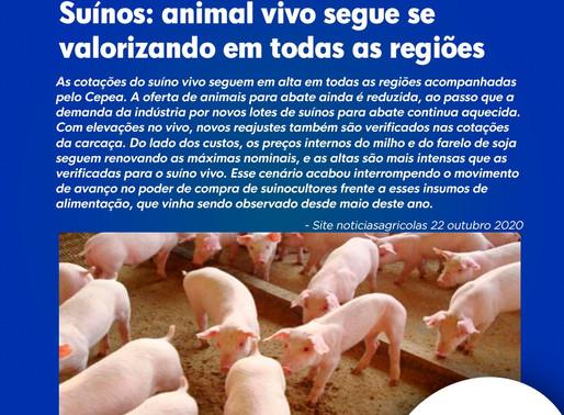 Suínos: animal vivo segue se valorizando em todas as regiões