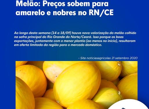 Melão: Preços sobem para amarelo e nobres no RN/CE