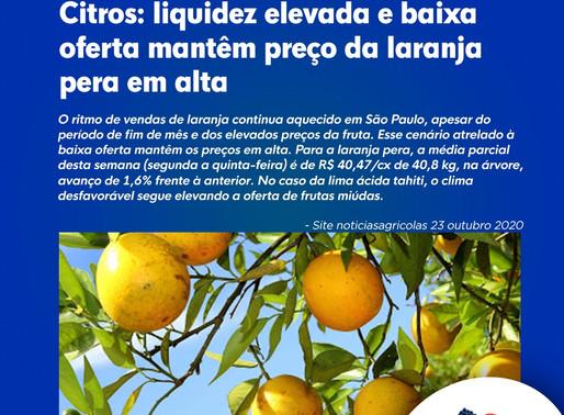 Citros: liquidez elevada e baixa oferta mantêm preço da laranja pera em alta