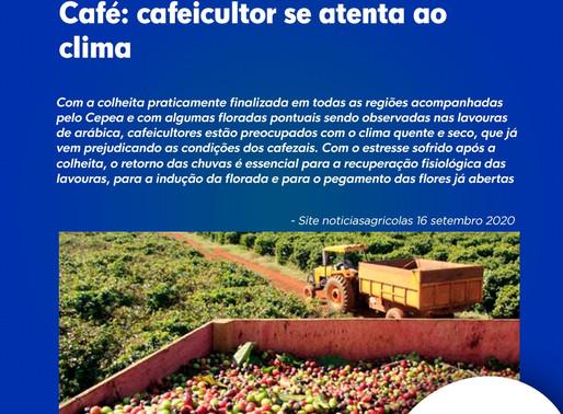 Café: cafeicultor se atenta ao clima
