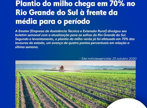 Plantio do milho chega em 70% no Rio Grande do Sul à frente da média para o período