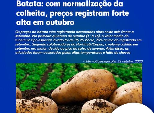 Batata: com normalização da colheita, preços registram forte alta em outubro