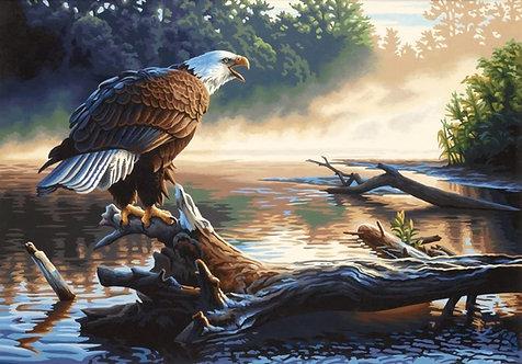 Águila - 91379 Dimensions - Kit de Pintura por número