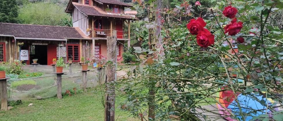 Rosas na Bilioteca.jpeg