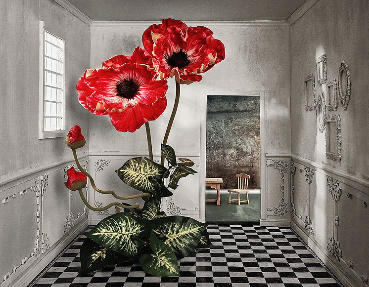 a poppy in my pantry rb.jpg