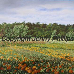 The Pumpkin Field - Bayham