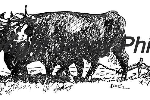 Mac Watson and His Oxen