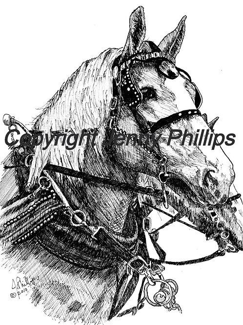 Belgian Horse Heads