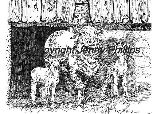 Ewe and Her Twin Lambs