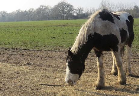Horse on Tape Lane Field.jpg