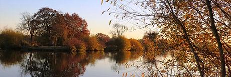 Lavells Lake Black-Swan-autumn-afternoon