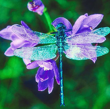 dragonfly.jpg 2014-2-26-18:15:16