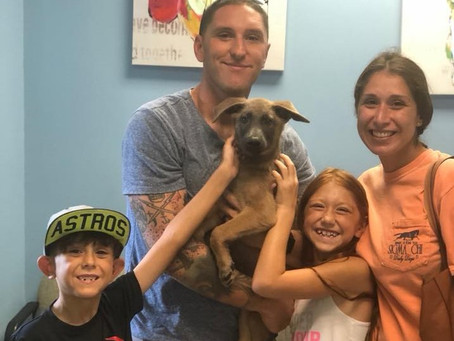 Adoption Fees Waived Today at Fort Bend Animal Shelter