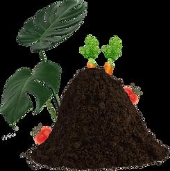Humus mit Pflanzen.png