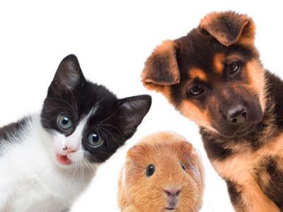 La promesse d'achat et les animaux