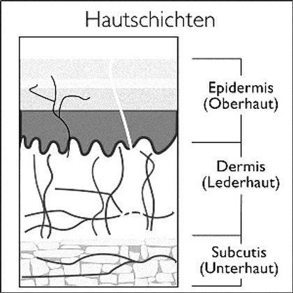 Hautschichten_edited.jpg