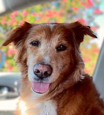 Zen Dog Spa & Pet Concierge