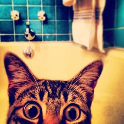 Instagram - #cat