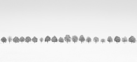 tosterup canola field trees bw version.j