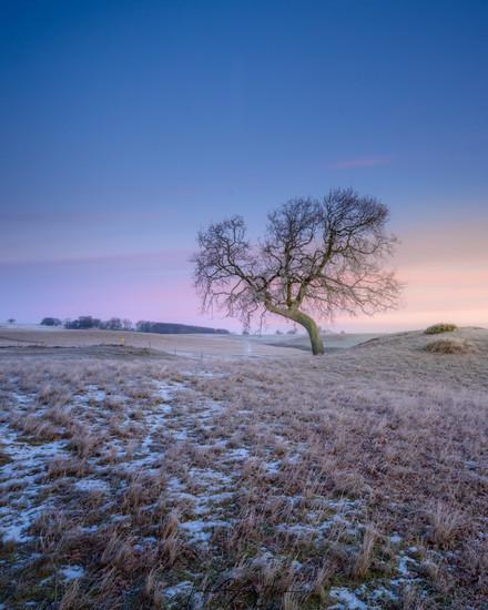 havange curvy lone tree sunrise 1.jpg