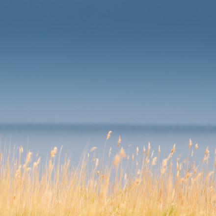 kivik grass minimalist.jpg