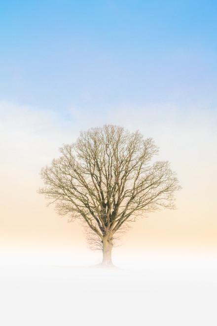 baskemolla tree sunrise fog winter 1.jpg