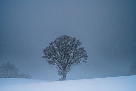 baske minimalist snow 13 final.jpg