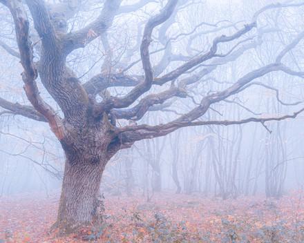 stenshuvud tree print edit.jpg