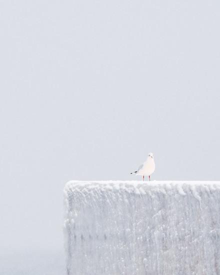 seagull harbour snow 3.jpg