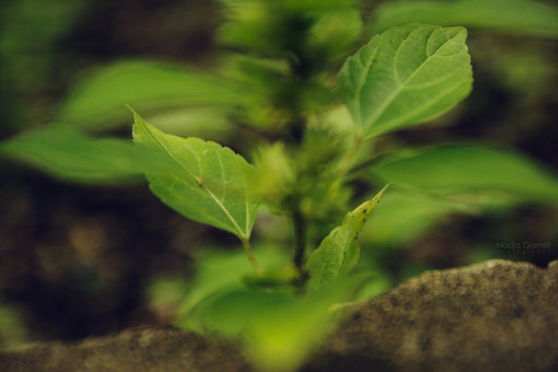 leaf_dance_by_silber_englein-d6nfje9.jpg