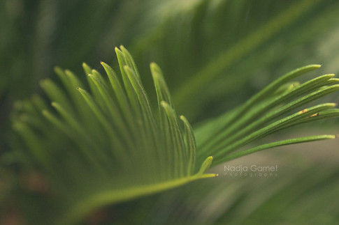 palm_by_silber_englein-d62zyeg.jpg