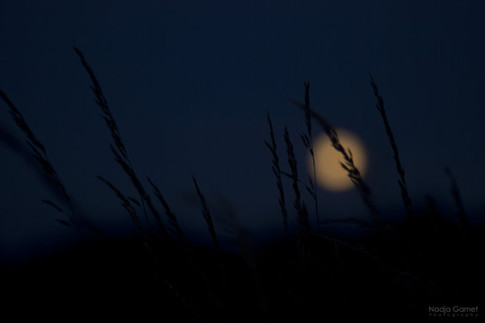 moonlight_by_silber_englein-d6hdgzm.jpg