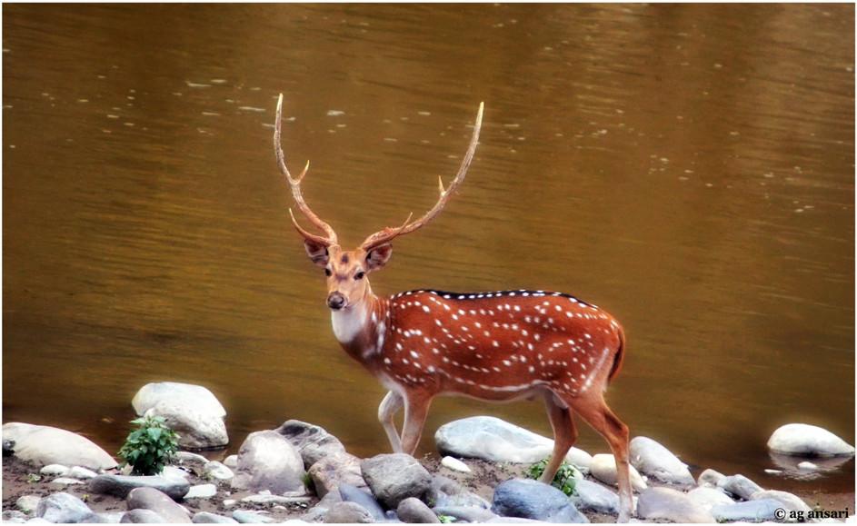 camp_wildlife (143).jpg