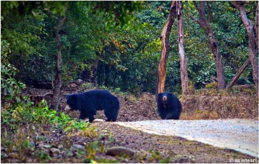 camp_wildlife (144).jpg
