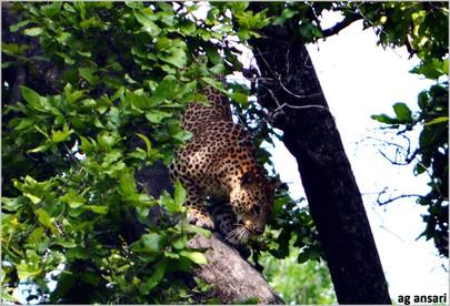 camp_wildlife (64).jpg