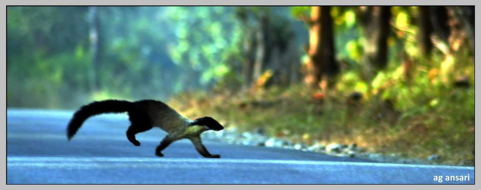 camp_wildlife (38).jpg