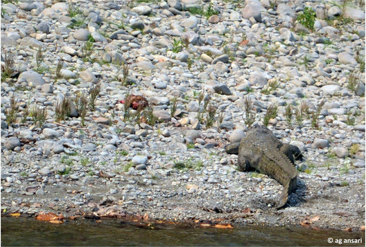 camp_wildlife (104).jpg