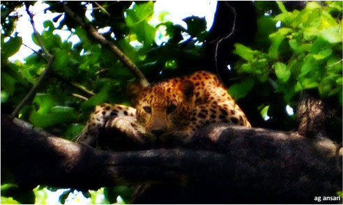 camp_wildlife (101).jpg