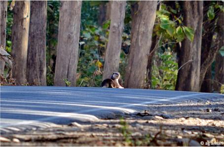 camp_wildlife (107).jpg