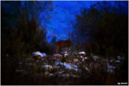 camp_wildlife (102).jpg