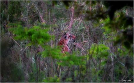 camp_wildlife (133).jpg