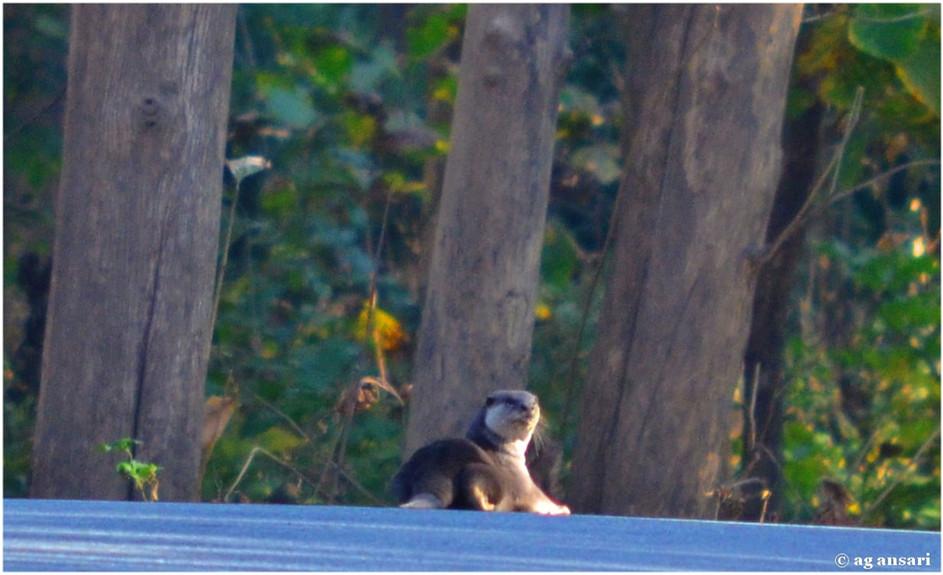 camp_wildlife (142).jpg