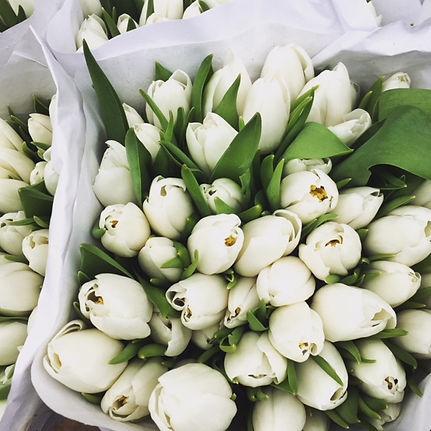 White Tulips Photo.jpg