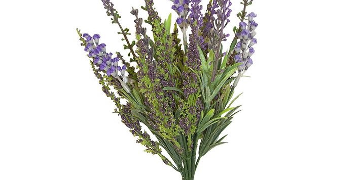 Ferm Bush and Lavender Bundle