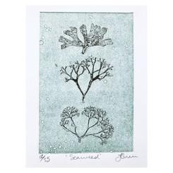 'Seaweed'