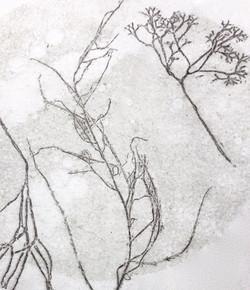 'Seaweed II', 2020