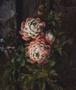 Succulent, Trebah Garden