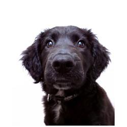 Dora, puppy portrait