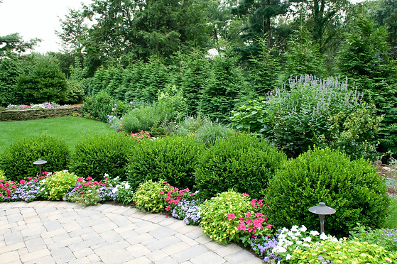 Small Tree and Shrub Care Services.png