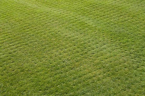 Aerated_Lawn.jpg